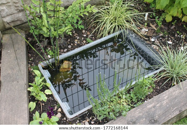DIY tiny garden pond made from a plastic tub surrounded by plants with fence reflection
