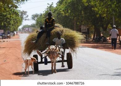 Djanne, Mali - December, 28, 2014: People with donkeys carrying a heavy wood load