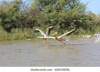 Djoudj National Bird Sanctuary, in the north of Senegal, is popular for the migrating birds. This place has been designated World Heritage Site. It is really amazing to enjoy the spectacle.