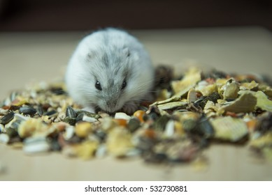 Djungarian hamster.