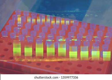 DNA analysis by PCR-RFLP of Apis mellifera by gel electrophoresis, PCR band of honey bees, DNA sequencing technique.