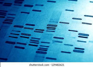 DNA fingerprints.