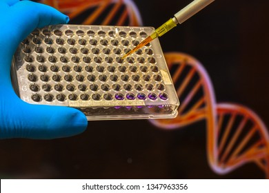 DNA research. Pipette the biological sample into the well plate.