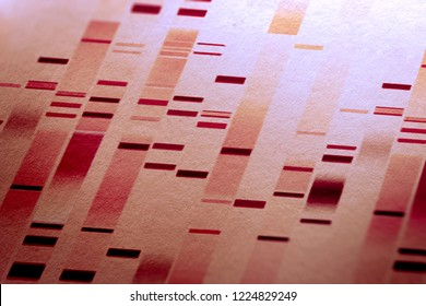 DNA test and genome map sequence.