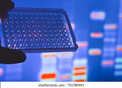 DNA testing in the laboratory. A well plate in the researcher's hand.