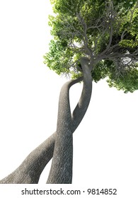 dna tree concept
