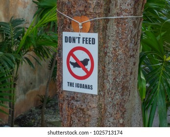 Do not feed iguanas sign in Cancun, Mexico