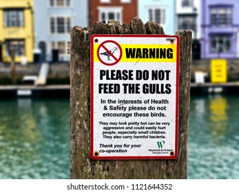 Do Not Feed Seagulls sign, Dorset, UK, Europe, June 2018
