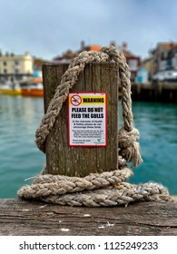 Do Not Feed Seagulls sign, Dorset, UK, Europe, June 2018