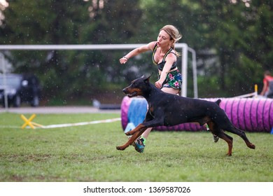 Doberman pinscher with its female handler running dog agility course on rainy day.