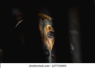 A Doberman puppy behind bars of a cage.