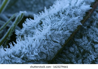 A dock leaf encrusted with hoar frost in the first light of morning. Deep blue hues colour the frost crystals. Shallow depth of field. Intentionally underexposed to exaggerate blue our light.