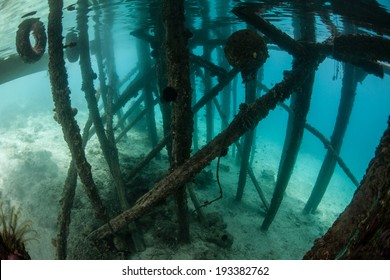 A dock in Raja Ampat, Indonesia creates a shadowed habitat where many fish like to aggregate. Raja Ampat is the heart of the Coral Triangle and is relatively unexplored.