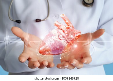 Doctor cardiologist shows a heart donor in his hands.