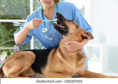 Doctor cleaning dog's teeth with toothbrush indoors. Pet care
