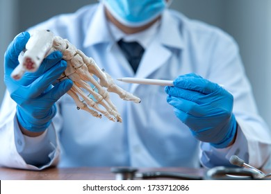 The doctor explained the structure of the foot bone with a model.