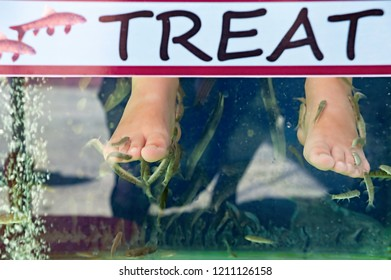 Doctor fishes cleaning a bather's feet from sloughed dead skin