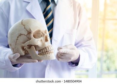 Doctor is holding a human skull in his hands and point to the skull.and copy space.