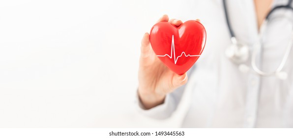 The doctor is holding and showing a red heart. Concept for topics: health, support, international or national cardiology day.