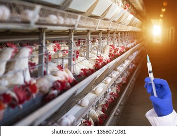 Doctor holding a syringe against the background of the poultry farm concept of antibiotics and hormones in chicken eggs and chicken meat, incubator