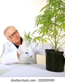 Doctor Sativa, a board certified Medical Marijuana Doctor explains the Medical Benefits of Medical Cannabis and how it grows from a simple organic plant into a Medical drug for many around the world