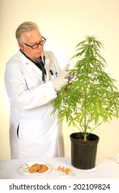 """Doctor Sativa a Board Certified Medical Marijuana Doctor listens carefully to the faint """"life signals"""" aka """"plant heart beats"""" with his stethoscope on one of his research subjects."""