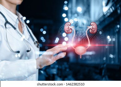 The doctor scans the urinary system on blurred background.