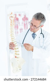 Doctor showing anatomical spine with his pen in clinc