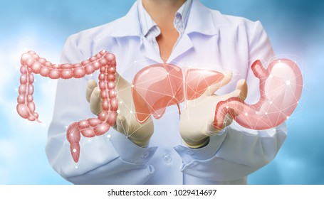 Doctor shows organs the digestive system on blurred background.
