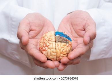 Doctor using finger to hold a brain model with both hands in concept of taking care the brain