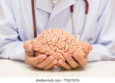 Doctor in white gown holding human brain model