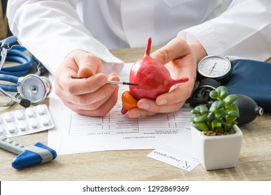 At doctors appointment physician shows to patient shape of urine bladder with focus on hand with organ. Scene explaining patient causes and localization of diseases of bladder and the urinary system