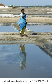 Documentary image editorial. Pondicherry, Tamil Nadu, India - July 05 2014. Poor workers picking up, collecting the sald, in big field, manual labour, organic agriculture, very hard job