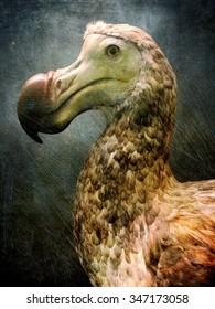 A dodo bird closeup portrait against an artistic background