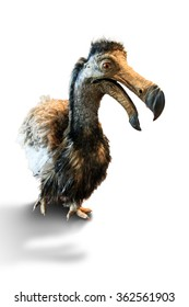The dodo (Raphus cucullatus), an extinct flightless bird that was endemic to the island of Mauritius, isolated on white