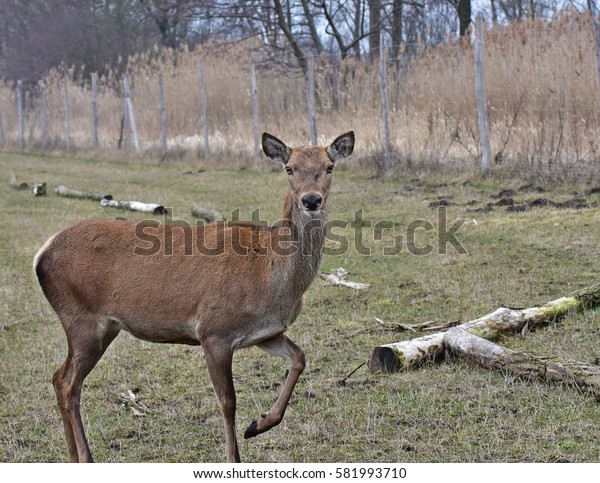 a DOE looking fascinated