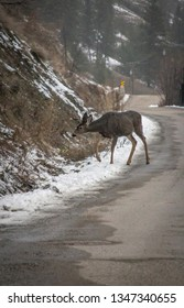 A Doe on the road in Vernon BC