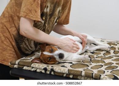 Does Massage for Dog. Pet massage.