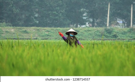 f7b45479c9b DOF  Asian woman wearing a straw hat throwing seeds across the lush green  field in
