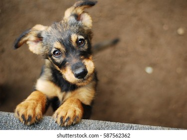 Shelter Images, Stock Photos & Vectors | Shutterstock