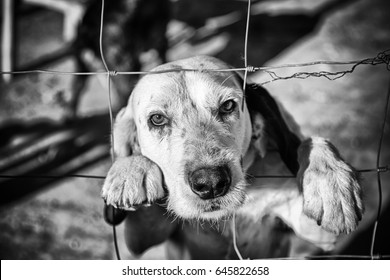 Dog abandoned behind bars, detail of a homeless pet, loneliness and pity