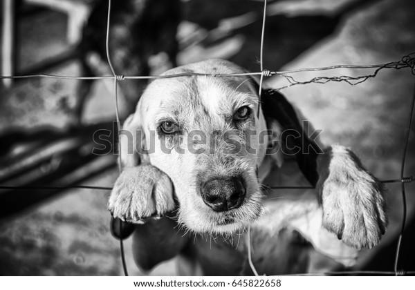 Chien abandonné derrière les barreaux, détail d'un animal de compagnie sans abri, solitude et pitié