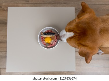 Dog About to Eat Bowl of Raw Food with Egg and Sardines