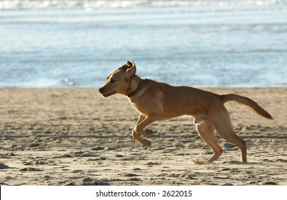 dog in action on the beach