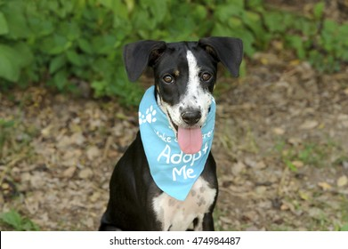 Dog adoption is a shelter animal with bright brown eyes and big adorable floppy ears hoping to be adopted, by someone who love him.