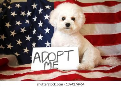 Adopt Me Images, Stock Photos & Vectors   Shutterstock