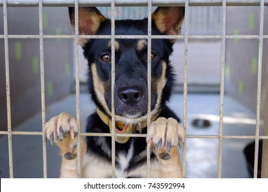 dog adult mongrel sad sitting in a cage in a dog kennel
