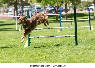 Dog in an agility competition set up in a green grassy park