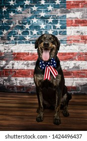Dog With American Flag 4th of July