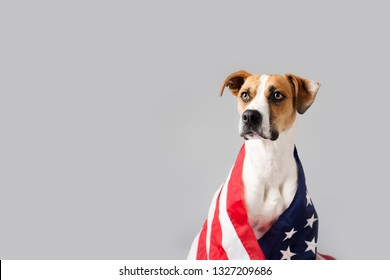 Dog with American Flag Isolated